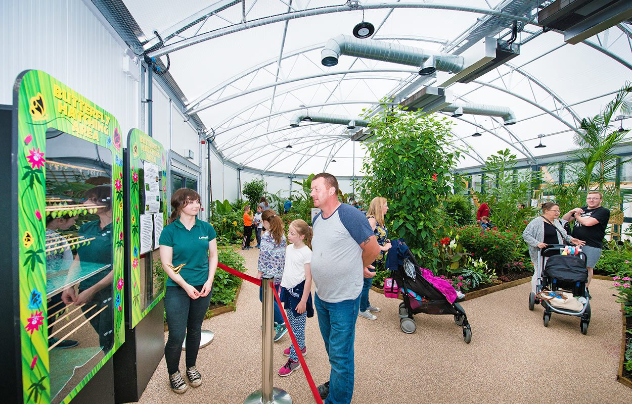 Fordingbridge Landmark Butterfly House Attraction