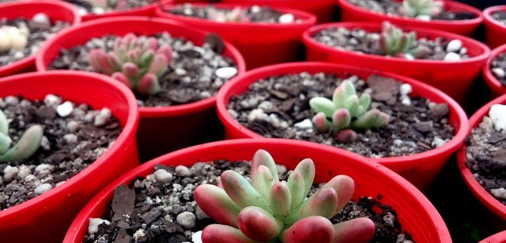 Plant for Fordingbridge Garden Centre blog post